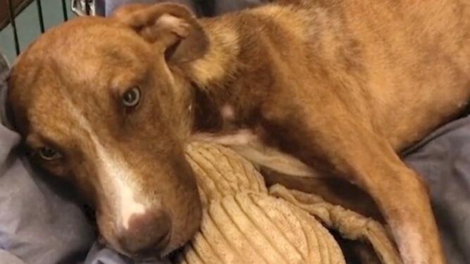 Pod gruzami znaleziono psa. Nie był w stanie nawet skomleć